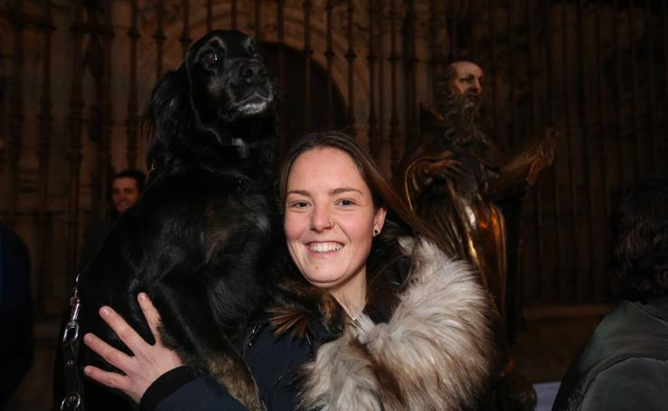 Logroño celebra San Antón con la bendición de los animales