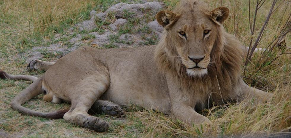 19 animales (como poco) que puedes ver en un safari en Botswana
