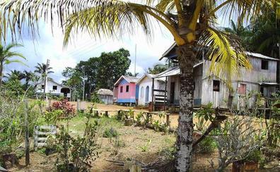 De la Amazonia a Madagascar, el cambio climático podría amenazar al 50% de las especies