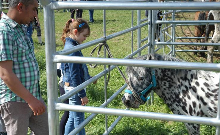 Feria del ganado equino de Rincón de Soto