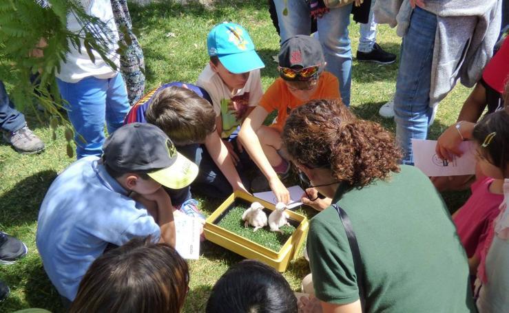 Campamento de Verano Tierra Rapaz: Ciencia y naturaleza unidas para los peques