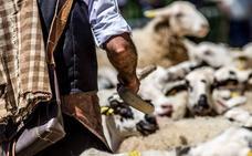 Ya vuelven los pastores a la sierra