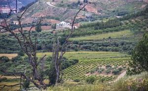 Villamediana ha replantado en año y medio 2.200 árboles en cerros y en el casco urbano