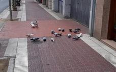 La Guindilla: todos los días echando migas a las palomas