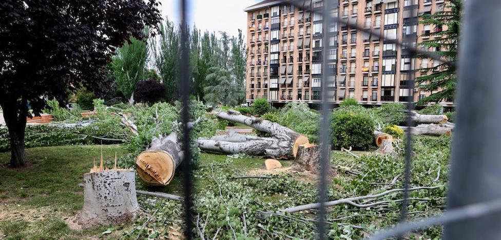 El Ayuntamiento asegura que en la plaza de México sólo se talan «los árboles que están enfermos»