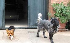 Un perro se muda de Cordovín a Cañas para estar derca de su 'amada'