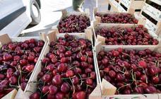 Feria de la cereza en Albelda