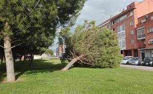 Árbol caído en la calle Rodancha