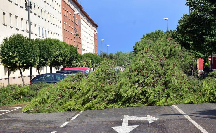Un árbol se desploma en la calle del Ebro