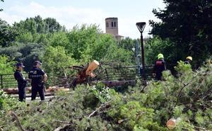 Los fuertes vientos derriban un andamio y varios árboles en Logroño