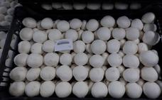 Investigan la mejora de las propiedades de los hongos con efecto antitumoral