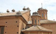 Las cigüeñas de la Colegiata de San Miguel de Alfaro, a trávés de internet