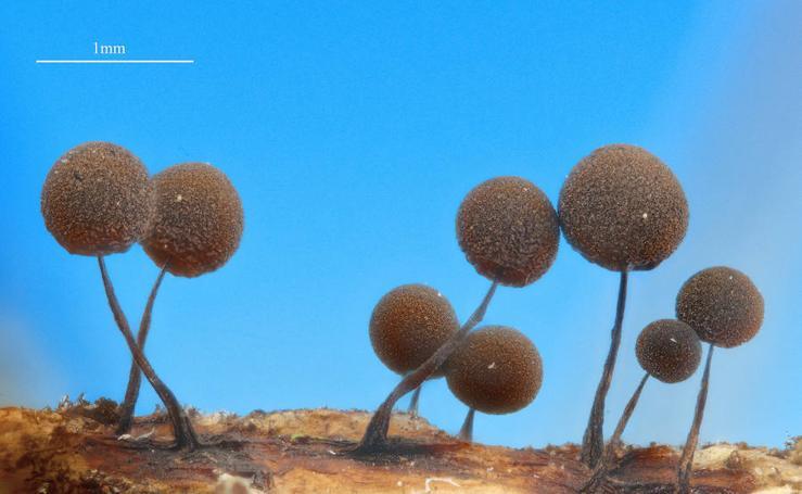 Del ojo de una hormiga a los anillos de saturno