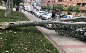 Un árbol cae sobre los coches y la calzada en la calle Estambrera