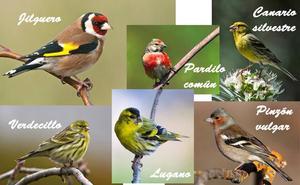 Amigos de la Tierra, satisfechos por la prohibición de capturar algunos pájaros