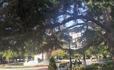 La Guindilla: una revisión para las ramas del cedro