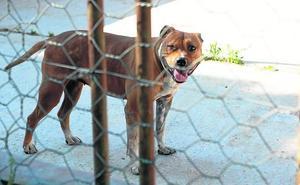 Perros peligrosos... o dueños irresponsables