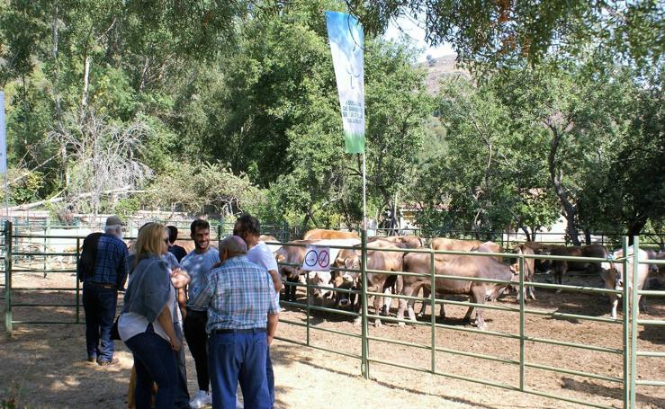 Feria de ganado de las siete villas en Viniegra de Abajo