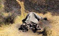 Encuentran un centenar de elefantes muertos sin sus colmillos