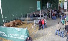 Más de 2.000 cabezas de ganado en la Feria de Villoslada