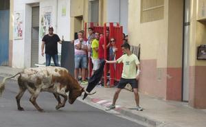 Alfaro registra una cuarta cogida en sus encierros