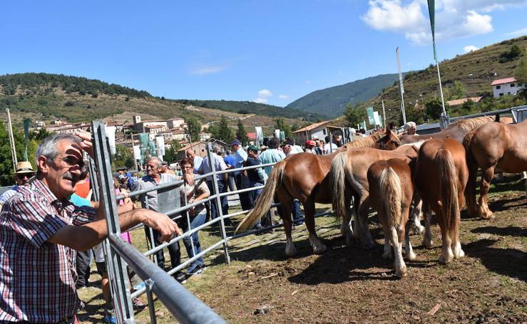 Feria de ganado de Villoslada