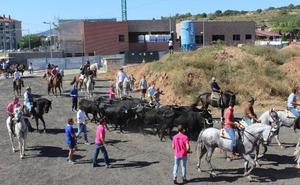 Fuenmayor recupera la guía de las vacas a la antigua usanza