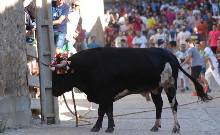 Toros ensogados en Cabretón