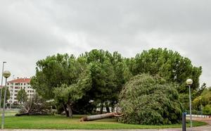 Barro, ramas rotas y árboles caídos, las consecuencias de la tormenta