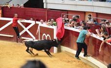 Las vacas imponen su voluntad