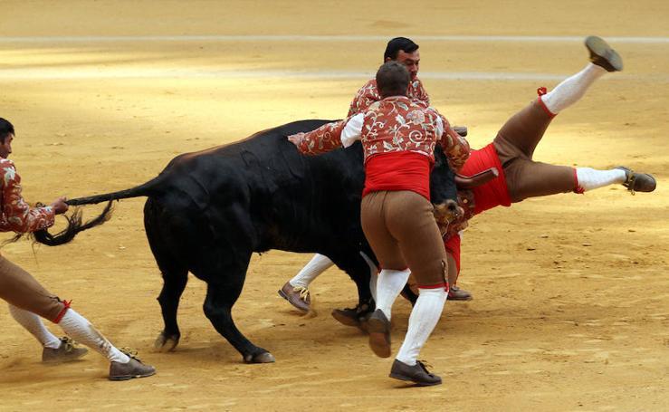 Forcados portugueses en La Ribera