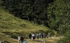 Sierra Cebollera organiza el día 13 un paseo por los altos bosques del Iregua