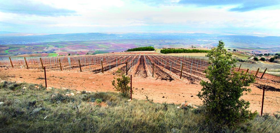 Más de mil hectáreas aún sin hincar y la caída de ventas presionan al sector