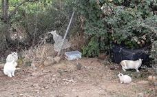 Crean una plataforma que esteriliza por su cuenta gatos callejeros en Logroño