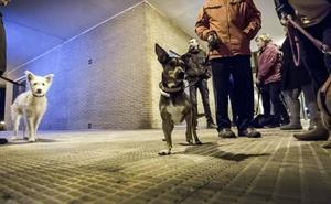 Dueños de perros se organizan para buscar al «envenenador»