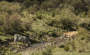 La Rioja facilita que los ganaderos adquieran dispositivos de geolocalización