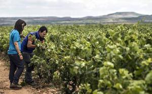 Más de 30 productores riojanos, en la primera Feria de Alimentos Ecológicos de La Rioja