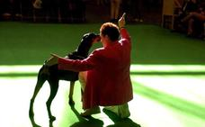 Condenan a pagar 6.369 euros a la dueña de un dóberman que atacó a dos perros y mató a uno de ellos