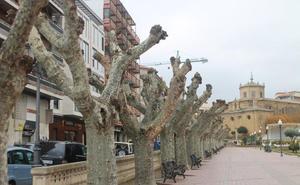 Haro vive estos días las tareas de poda de todos los árboles de la ciudad