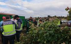 La vendimia en Rioja Alavesa se salda con 17 trabajadores irregulares detenidos