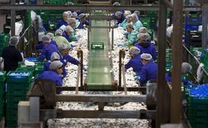 Las empresas del champiñón riojano alertan de la competencia manchega