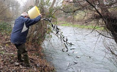 Los ríos riojanos han sido repoblados con más de 900.000 ejemplares de trucha