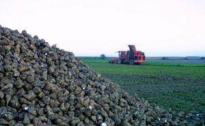 La UAGR pide la implicación del Gobierno riojano para apoyar al sector remolachero