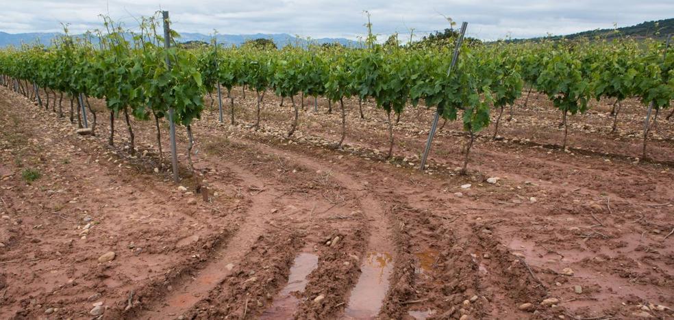 El precio de la tierra se eleva otro 7% el último año y el del viñedo casi el 9%