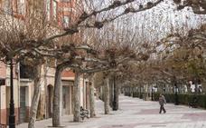 PP y Barrón critican que aún no se hayan podado los árboles de Santo Domingo