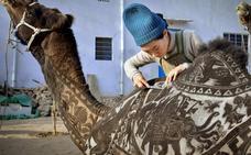Este camello está hecho un cuadro