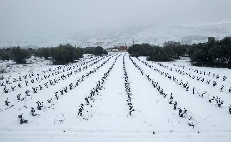 Domingo de nieve en La Rioja (II)