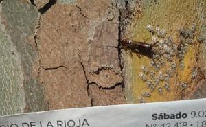 La Guindilla: mosquitos tigre en el parque San Miguel