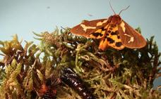 Las mariposas de Sojuela crean ciencia
