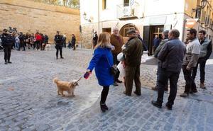 El Gobierno central ve en 12 artículos de la Ley de Protección Animal dudas de constitucionalidad